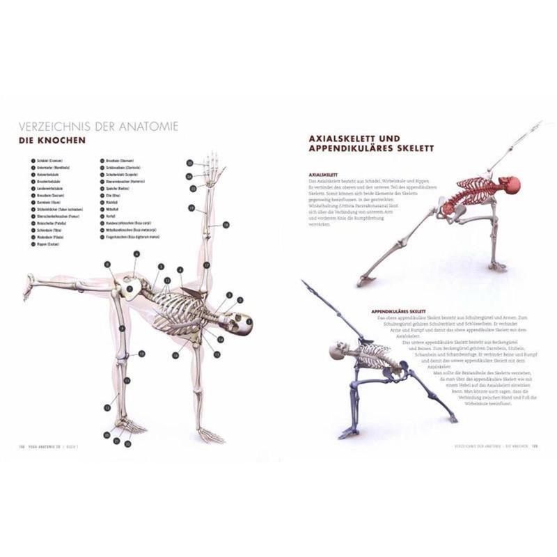 Yogaanatomie 3D, Standhaltungen - Yogavielfalt.de